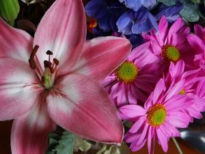 Flower #19