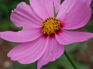 Flower #18