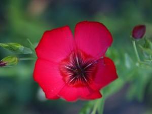 Flower #12